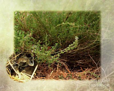 Photograph - Peaceful  Delight Bunnies by Sandra Clark