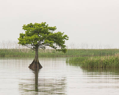 Photograph - Peaceful Feeling by Julie Andel