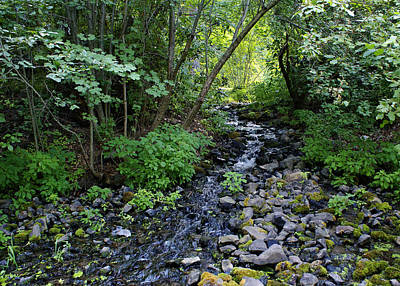 Photograph - Peaceful Flowing Creek by Ben Upham III