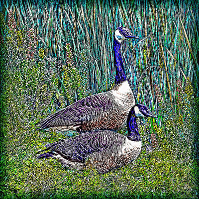 Digital Art - The Goose And The Gander - Lakeside Scene In Boulder County Colorado by Joel Bruce Wallach