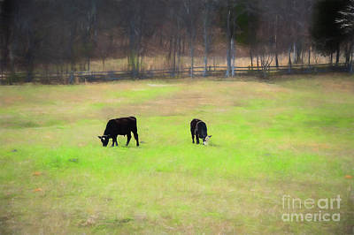 Digital Art - Peaceful Grazing Cows by Mary Raderstorf