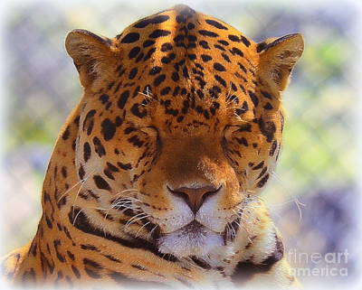 Photograph - Peaceful Jag by Tru Waters