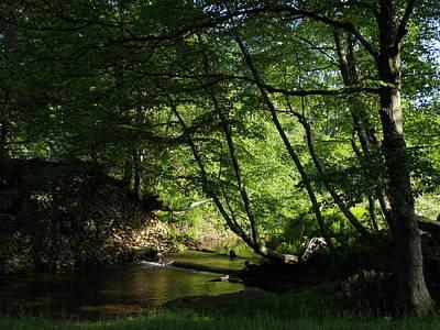 Photograph - Peaceful Mountain Stream by Diannah Lynch
