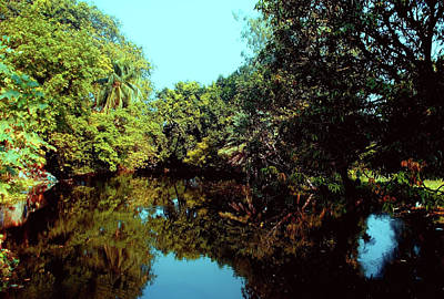 Photograph - Peaceful Nature by Amar Singha