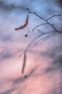 Photograph - Peaceful Nature by Vincent Pelletier