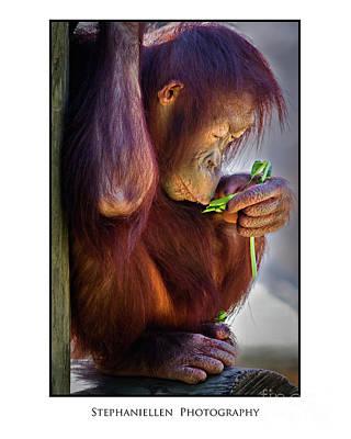 Peaceful Orangutan Art Print