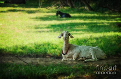 Photograph - Peaceful Pasture by Debra Fedchin