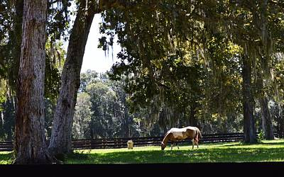 Photograph - Peaceful Pasture In Shady by Warren Thompson