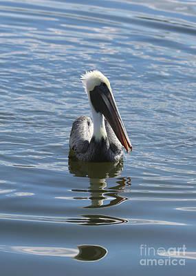 Photograph - Peaceful Pelican In Blue by Carol Groenen