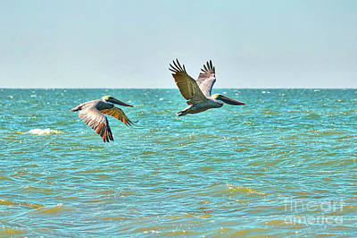 Photograph - Peaceful Pelicans Over Turquoise Water by Carol Groenen