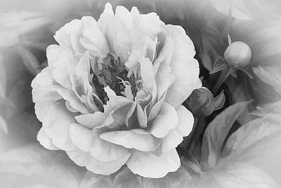 Photograph - Peaceful Peony by Leda Robertson