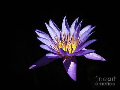 Photograph - Peaceful Purple by Robin Zygelman