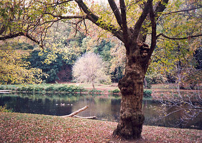 Photograph - Peaceful Repose by Emery Graham