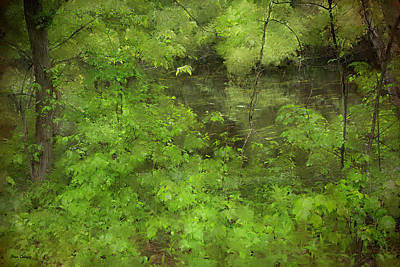Photograph - Peaceful Stream by Fran Gallogly