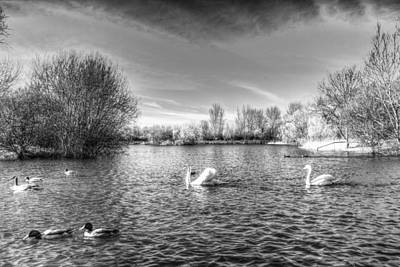 Swan Pair Photograph - Peaceful Swan Lake by David Pyatt