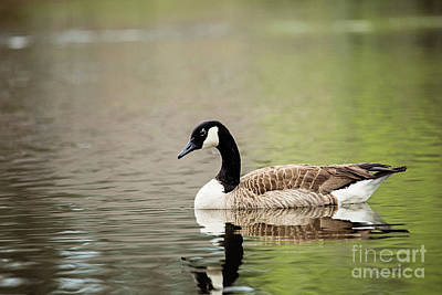 Photograph - Peaceful Tranquility by Scott Pellegrin