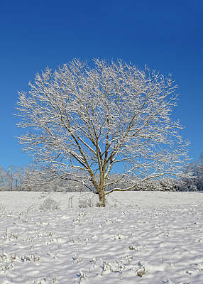 Photograph - Peaceful Winter by Susan Leggett