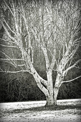 Photograph - Peaceful Winter Tree In Black And White by Carol Groenen