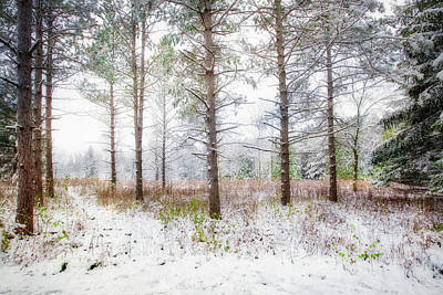 Peaceful Woods - Winter At Retzer Nature Center  Art Print
