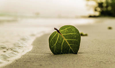 Photograph - Peaceful Zen Sand Beach Art Photography Prints by Wall Art Prints