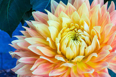 Popstar And Musician Paintings Royalty Free Images - Peach and Yellow Dahlia with Blue backgropund Royalty-Free Image by Lynne Albright