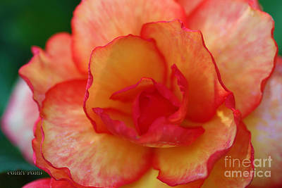 Begonia Garden Painting - Peach Begonia by Corey Ford