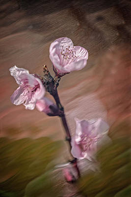 Photograph - Peach Blossom by David Waldrop
