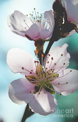 Photograph - Peach Blossoms 11 by Andrea Anderegg