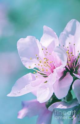 Photograph - Peach Blossoms 13 by Andrea Anderegg
