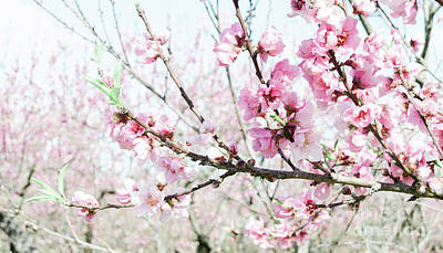 Photograph - Peach Blossoms 17 by Andrea Anderegg