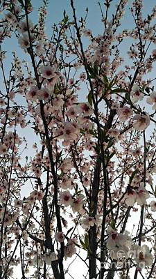 Peach Blossoms Art Print by Diamante Lavendar