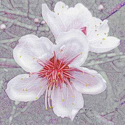 Digital Art - Peach Blossoms by Jane Schnetlage
