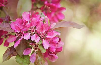 Dappled Light Photograph - Peach Blossoms by Margaret Goodwin