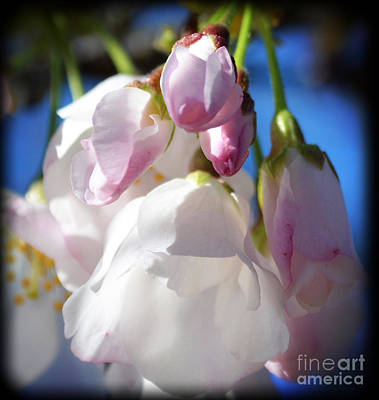 Photograph - Peach Blossoms Upclose And Personal by Eva Thomas