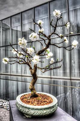 Peach Bonsai Tree Art Print
