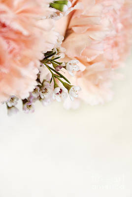 Photograph - Peach Carnations And White Waxflowers by Cindy Garber Iverson