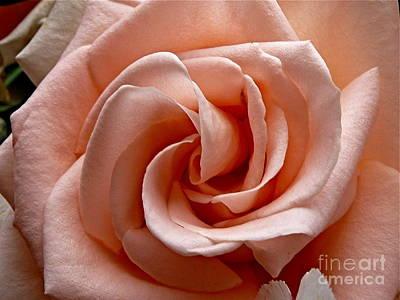 Peach-colored Rose Art Print