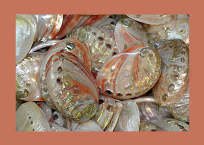 Photograph - Peach Coral Gold And White Shells by Carla Parris