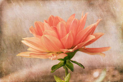 Photograph - Peach Dahlia In The Garden by Kim Hojnacki