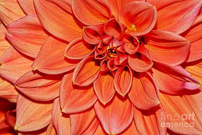 Photograph - Peach Dahlia Macro By Kaye Menner by Kaye Menner