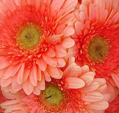 Painting - Peach Gerbers by Amy Vangsgard