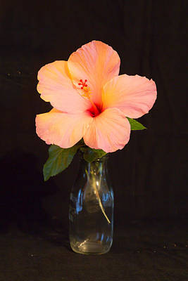 White Flower Photograph - Peach Hibiscus  by J Darrell Hutto