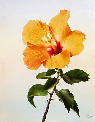 Photograph - Peach Hibiscus Faux Watercolor by Endre Balogh