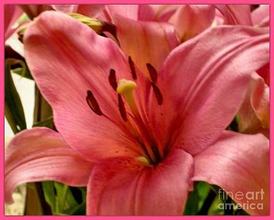 Photograph - Peach Lily by Joan-Violet Stretch