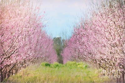 Photograph - Peach Orchard - Bring On Spring Series by Andrea Anderegg