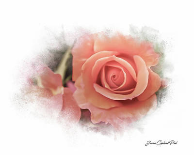Photograph - Peach Perfection by Joann Copeland-Paul