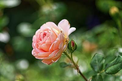 Photograph - Peach Petals by Richard Gregurich