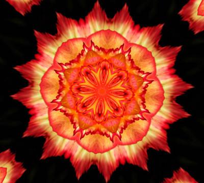 Peach Rose Kaleidoscope Art Print by Cathie Tyler