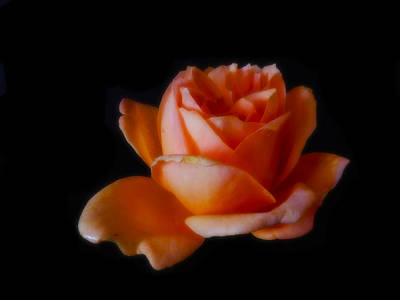 Photograph - Peach Rose by Mark Blauhoefer