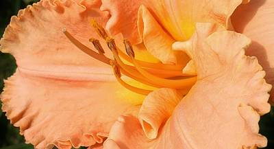 Photograph - Peach Ruffles by Bruce Bley